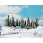 Noch 24681 Schneetannen