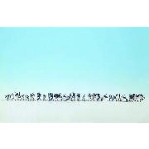 Noch 37161 XL Set Kühe, schwarz-weiß